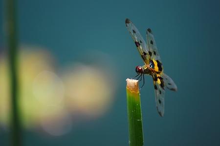 damsels: dragonfly