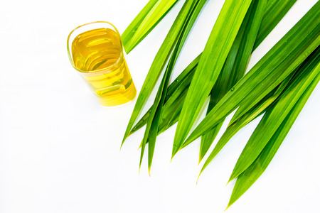 tectorius: pandan  Stock Photo
