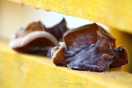 ethnobotany: Mushrooms