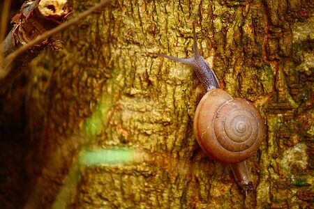 Tree Snail photo