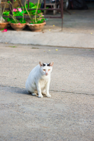 nice stay: Pregnant Cat staying