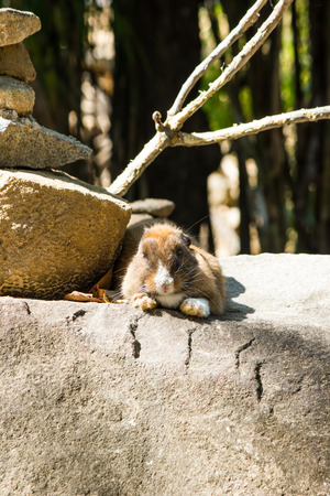 asian bunny: rabbit on the stone in  Thailand
