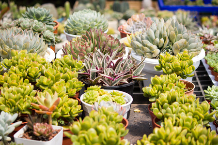 A collection of cactuses in a cactus garden
