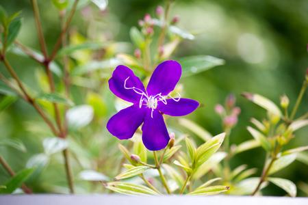 violet flower background. Bright sunny summer garden closeup