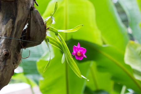 Orchid purple color Thai species on isolated background 免版税图像