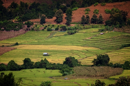 Mountain rice terraces in the village center  Northern Thailand photo