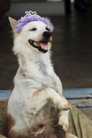 Crazy dog photo