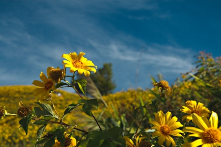 yellow flower on the mountain photo