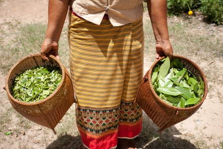 natural process: Leaves a natural material Process of weaving, dyeing, weaving ancient Thailand as silk
