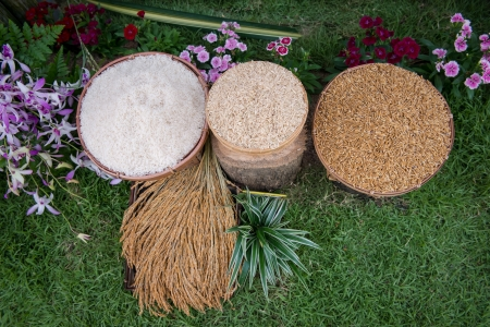 Rice, Thailand Rice Federation, which is the same as the top of the world photo