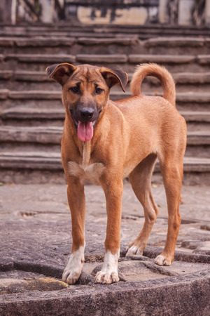 Stray dogs living on the streets or communities  photo