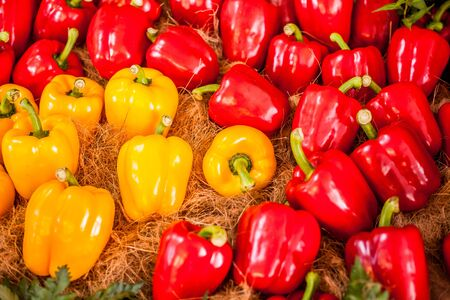 Bell pepper, beautiful colors are arranged. Banque d'images