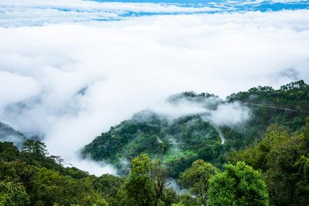 Sea fog on Doi Ang Khang, Chiang Mai, Thailands highest mountain. Banque d'images