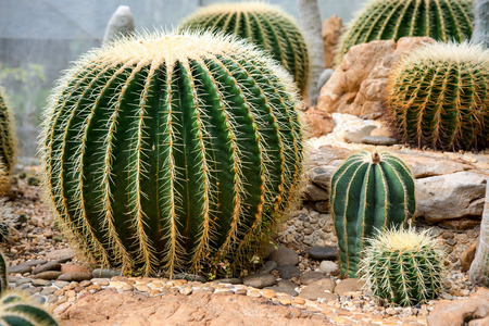 Many beautiful varieties of cactus and value. Banque d'images