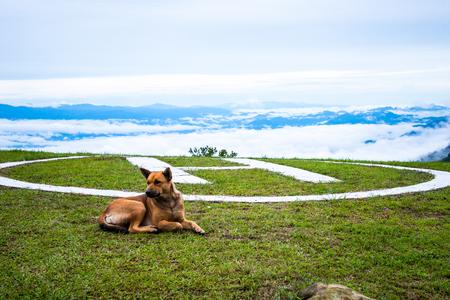Dog helipad and sea fog Doi Ang Khang, Chiang Mai, Thailands highest mountain.