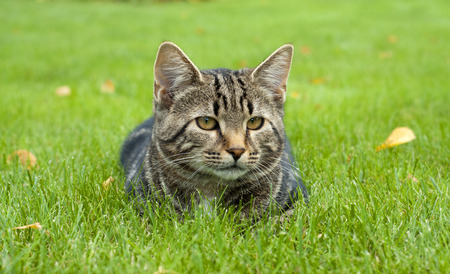 sward: cat in the grass