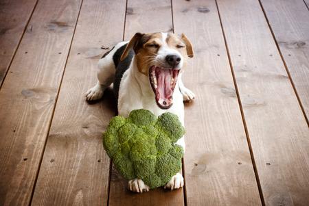 gape: dog lying with broccoli