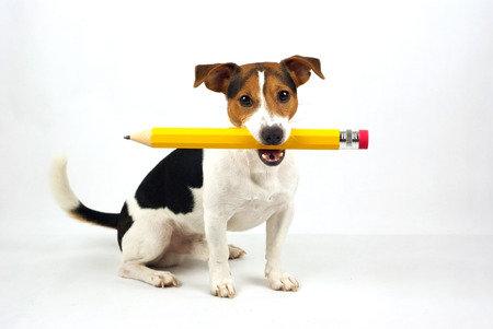 dog sitting on a white background, with a yellow pencil