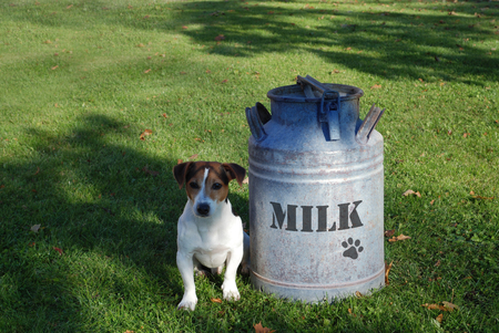 Dog sitting on the grass near a milk can