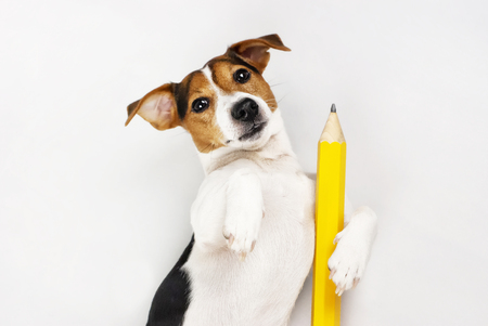 yellow: Dog lying on his back with a pencil