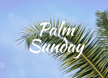 Palm leaf against blue sky with text Palm Sunday Stockfoto