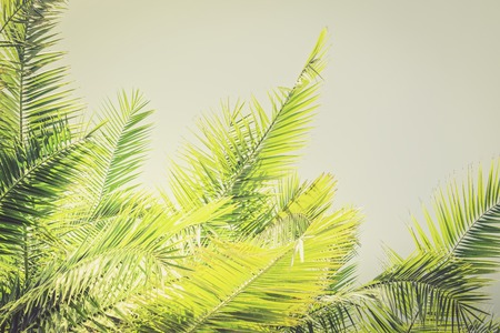 Yellow Toned sunlight Palm leaves background with copy space