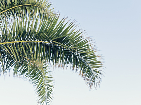 Palm leaf on blue sky with copy space Holy Week Easter concept Long weekend spring break
