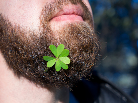 Close up bearded man face with natural green clover leaf St.Patriks day concept Stock Photo