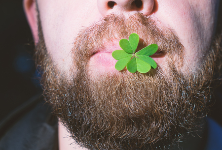 Close up Bearded man lips holds natural green leaf of clover. St. Patricks day concept Stock Photo