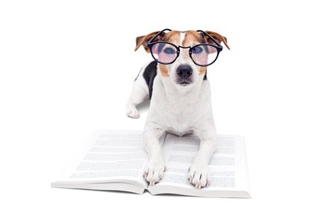 Smart cute jack russell terrier dog lying with open book in eyeglasses and looking at camera. Back to school concept, isolated on white 写真素材