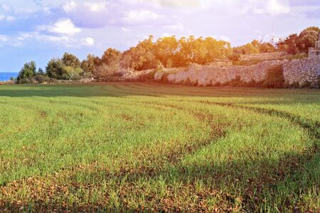 Scenic view of sowed wheat agricultural field in typical countryside landscape of Malta Banco de Imagens