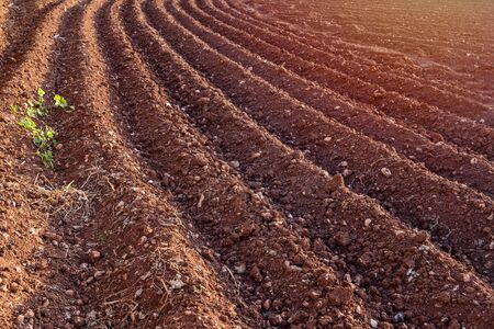 Furrows row pattern in plowed field prepared for planting crops in spring. Horizontal view in perspective