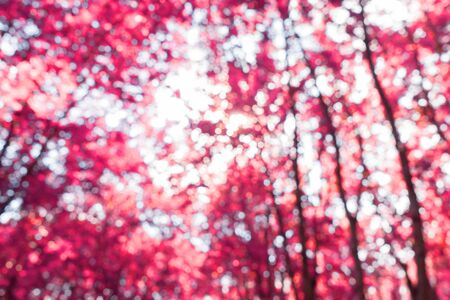 Low angle view of purple fantasy autumn trees in forest landscape with infrared effect. Abstract infrared photography 스톡 콘텐츠