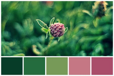Swatch color palette clover plant matching autumn colors. Collage collection combination of autumn light and dark green colors palette