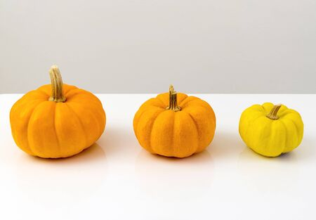 Three pumpkins stand in row on white. Halloween interior decoration in modern kitsch style