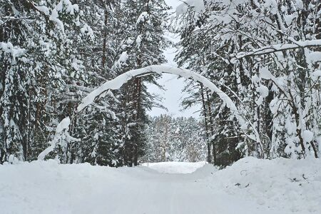 Scenic view of snowy winter forest with natural arch from wood trunk