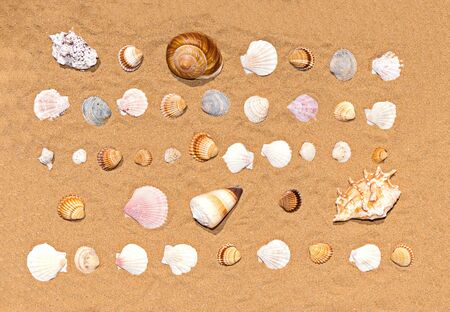 Flat lay pattern of colorful and various seashells on sea sand background, top view. Sea beach and summer concept Reklamní fotografie