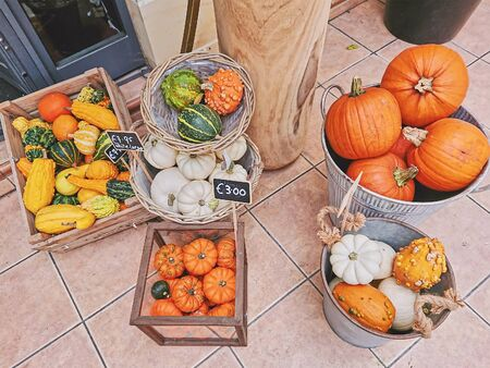 Variety of pumpkins in baskets and boxes for sale with price tag during Thanksgiving and Halloween, top view