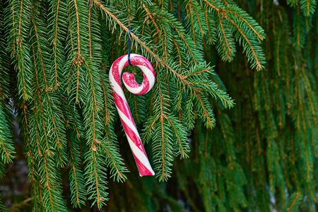 Curiously curly peppermint caramel candy cane hanging on fir tree branch. Christmas greeting card with copy space Stock fotó - 136244979