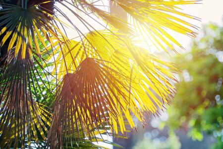 Abstract floral blurred background with palm leaves and sun rays, toned, blurred