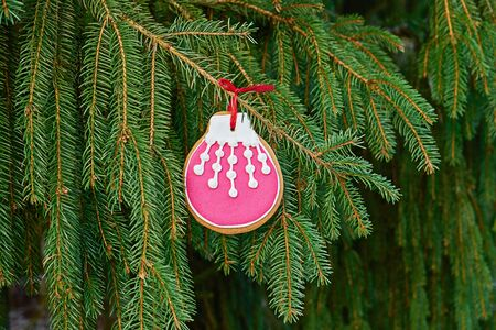 Christmas ball spiced gingerbread cookie with sugar icing hanging on fir branch. Zero waste Christmas concept, copy space Stock fotó - 136245886