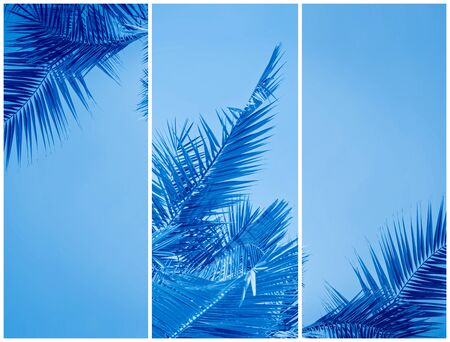 Collage of toned to classic blue Palm leaves with copy space. Holy Week Easter and Palm Sunday greeting card Stock Photo