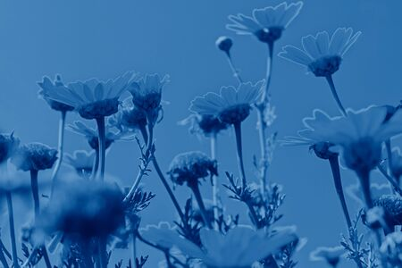 Closeup defocused flowers on blue sky background with copy space, low angle view and motion blur Stock Photo