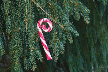 Curiously curly peppermint caramel candy cane hanging on fir tree branch. Christmas greeting card with copy space Stock fotó - 136788474