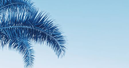 Long banner with palm leaves on blue background with copy space Holy Week Easter concept Long weekend spring break Stock fotó