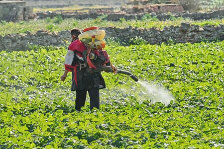 Farmer with manual electric fogger machine spraying pesticides and herbicides in potato field. Harvesting and agricultural work concept