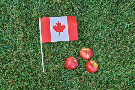 Canadian flag on green grass background with red apples. Happy Canada day. 1st July celebrate national holiday of Canada called as Canada's birthday