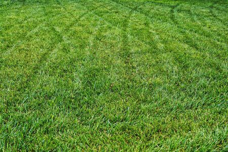 Green grass lawn close up texture with pathway from lawnmower. Gardening season. Summer green garden. Texture background. Abstract background. Gardening home