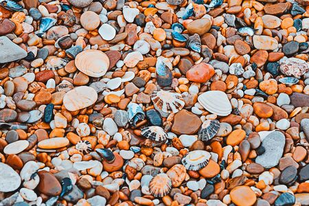 Full frame view of wet pebbles and shells. Multicolored natural pattern, selective focus Zdjęcie Seryjne