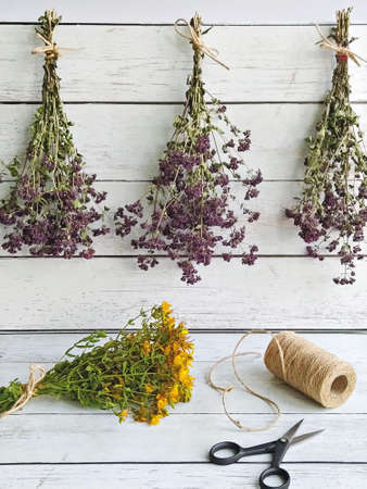 Harvesting herbs of oregano and tutsan into bundles and preparation for drying concept. Methods of preservation for herbs or flowers for future use Stock fotó